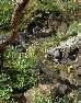 【流れ】石に隠れた給水口と水鉢のこぼれ水の2箇所を水源とする流れ。