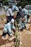 割いた竹がこのように使われます